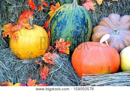 Still life with ripe color pumpkins and autumn leaves laying on dry hay on wooden cart horizontal view