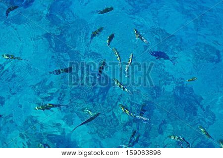 Sea with colorful fish