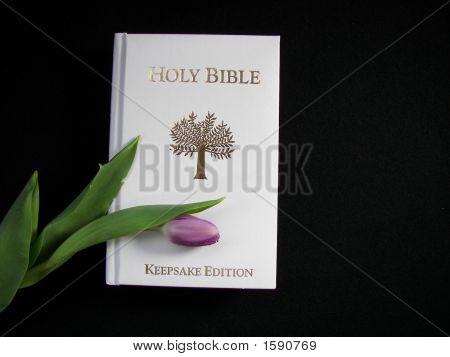 White Bible