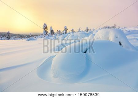 Beautiful Northern winter landscape - sunset, snow covered pine trees and big snowbanks