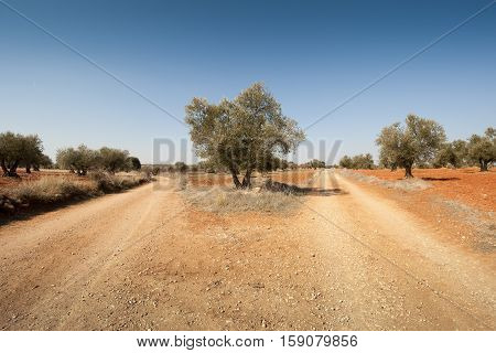 Dirt road in an agricultural landscape. Photo taken in Brea de Tajo, Madrid, Spain