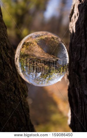 Magic crystal ball between tree branches for autumn fantasy imagery