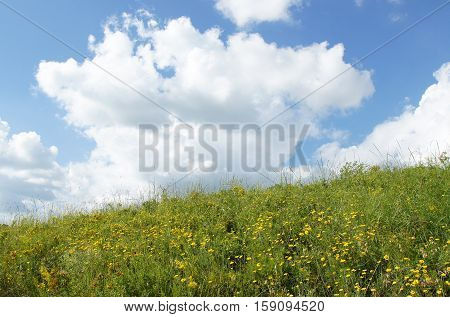 Summer landscape: meadow with yellow wildflowers under cloudy sky