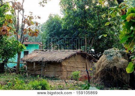 Thatched hut surrounded by trees in a village in Jim Corbett national park. Such homes are common in rural places in India