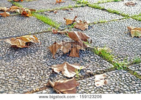 forest in autumn with leaves fallen on the ground.