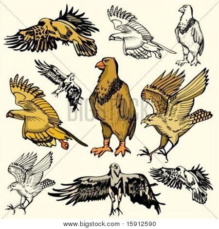 A set of 5 vector illustrations of birds.