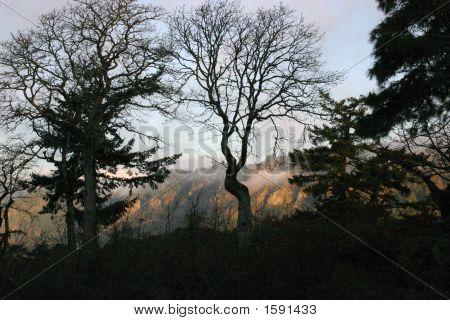 Dawn On The Columbia Gorge
