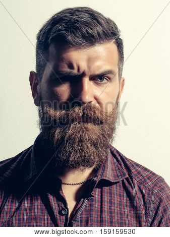 Frown bearded man with beard moustache and gray hair stylish hipster male in purple shirt isolated on white background