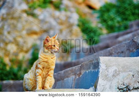 Adorable Red Tabby Cat On A Street