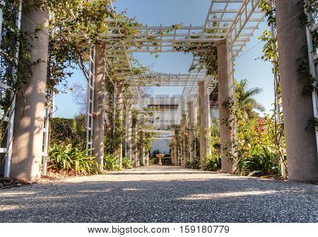 Rose garden trellis path with rose vines and a stone walkway