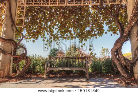 Worn wood bench under the shade of a wisteria vine