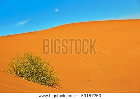 Green Plant Growing In Sand Dunes