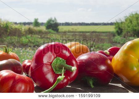 Fresh ripe vegetables on the background of the rural landscape