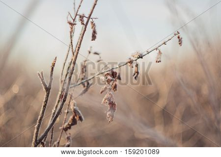 Branches in sunset light, amazing winter background