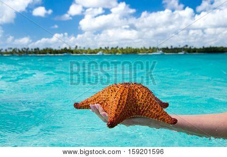 Starfish in hand in sea