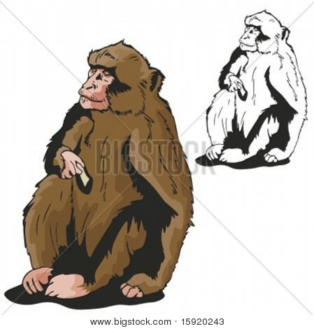 Vector illustration of a monkey.