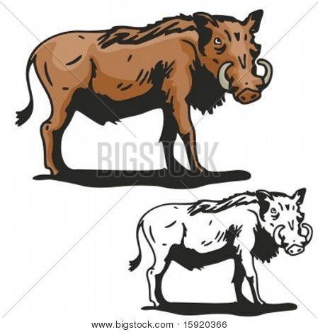 Vector illustration of a wild boar.