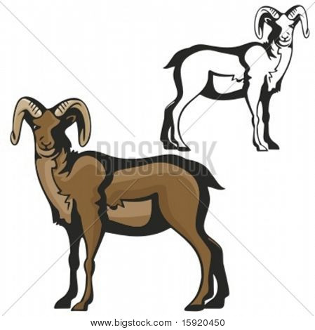 Vector illustration of a ram.