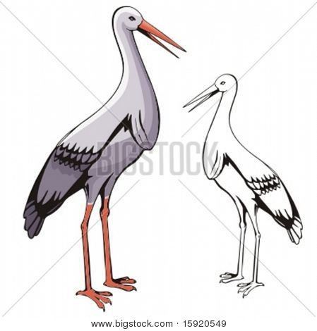 Vector illustration of a stork.