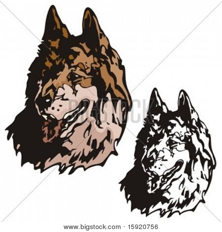 Vector illustration of a wolf.