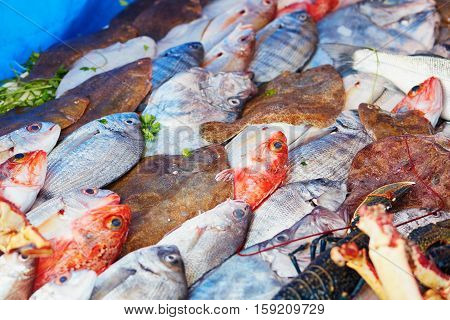 Catch Of The Day On A Traditional Moroccan Market (souk) In Essaouira, Morocco