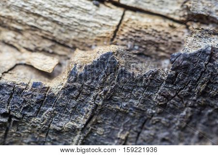 Edge Of Bark
