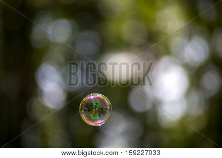 Among Other Bubbles