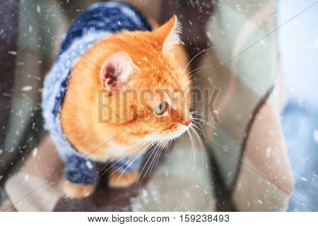 Beautiful red cat in a knitted sweater sitting on the plaid outdoors on a winter day