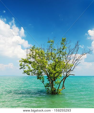 Tree Growing In The Water