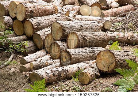 of wood logs waiting to be cut for fire