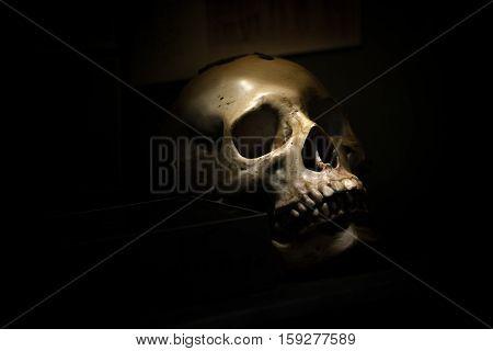 spotlight Shines on skull in dark room