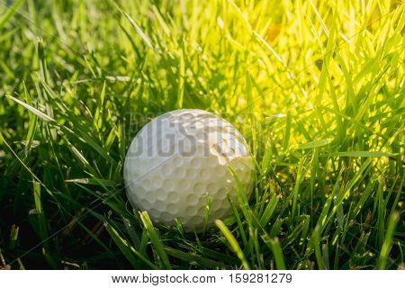 close up Golf ball on the green grass in the morning light.