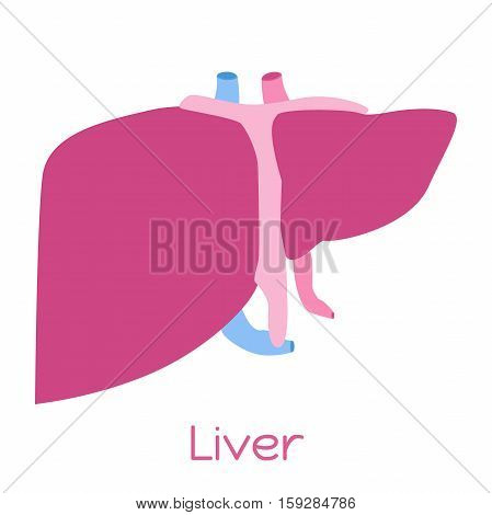 Liver illustration in flat style. Viscera icon, internal organs.