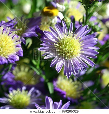 bouquet of beautiful autumn blue flowers closeup