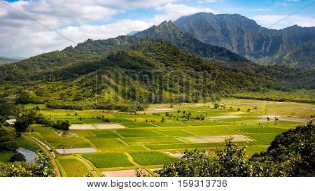 Panoramic Landscape View Of Hanalei Valley And Green Taro Fields, Kauai