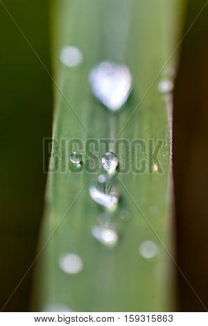 Grass Water Drop #6