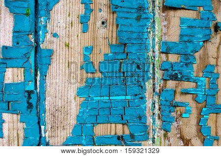 Painted distressed wood texture photo. Yellow timber board with weathered crack lines. Natural background for shabby chic design. Grey yellow wooden floor. Obsolete blue painted plank surface close-up photo. Cracked blue paint