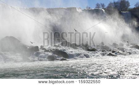 Seagull on Canada side of Niagara Falls