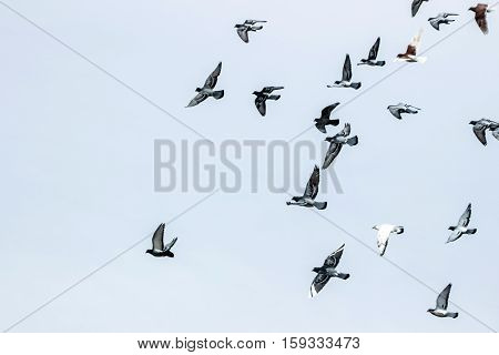 a pile of pigeons flying in sky