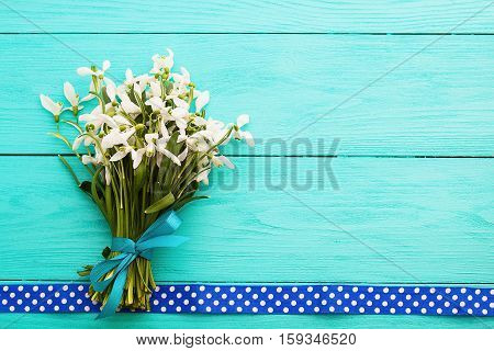 White snowdrops and ribbon in polka dots on blue wooden background with copy space. Top view