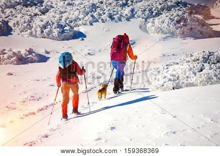 two girls are traveling with a dog in the mountains in winter the snowy mountains during the winter holidays and mountaineering.