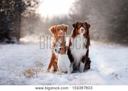 Three Dogs Sitting Together Outdoors In The Snow