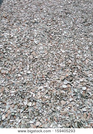 Oyster shell, Crushed oyster shell, Nature background