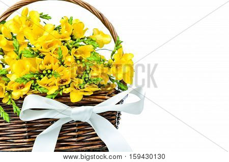 Yellow freesia flowers in the wicker on white background