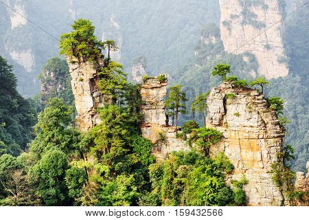 Green Trees Growing On Tops Of Natural Quartz Sandstone Pillars