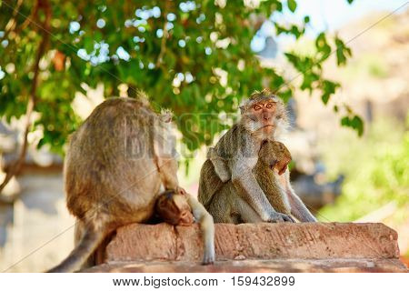 Monkey Family In Their Natural Environment
