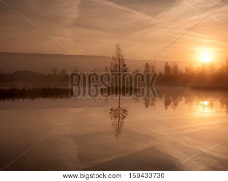 Swampy Mountain  Lake With Mirrored  Water Level In Mysterious Forest, Abandoned Birch Tree