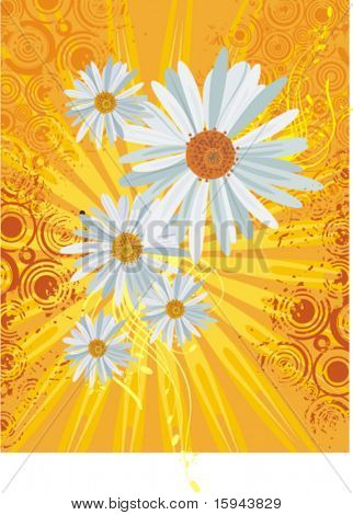 Floral background with daisies, light rays and grunge details, vector illustration series.