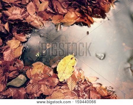 Fallen Beech Leaves And Stones In Water Of Mountain River. Autumn Colors. Symbol