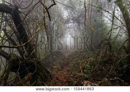 Gloomy natural tunnel in a foggy tropical forest, Chiang dao, Thailand